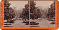 4398 - Orange and Walnut Orchard, Gen. Stoneman, San Gab'1., Cal.