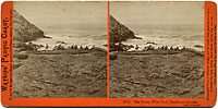 2053 - Sea Lions, West End, Farallone Islands, Pacific Ocean